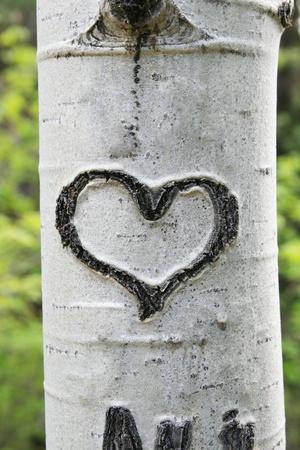 흰 아스펜 트렁크 나무 껍질에 새겨진 심장