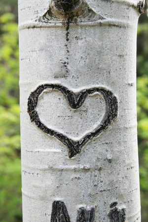 carving: heart carved in white aspen trunk bark Stock Photo