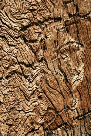 distressed wood grain in old weathered pine tree trunk photo