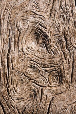 circular wood grain macro from a weathered cottonwood trunk Stock Photo - 9112632