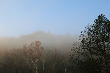 image of tree tops in a foggy forest in the morning in fall with different horizon lines Stock Photo - 9178973