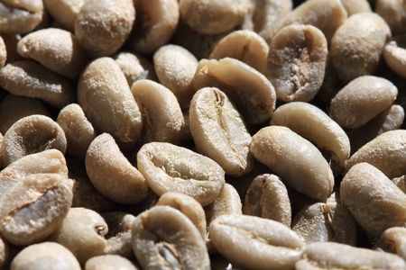 green coffee bean macro at an angle with selective focus Stock Photo - 9272979