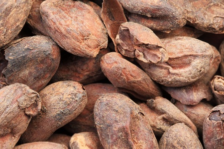 macro image of cocoa or cacao beans Stock Photo - 9312110