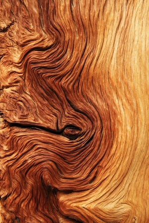 contorted brown and tan wood grain from alpine pine tree roots Stock Photo