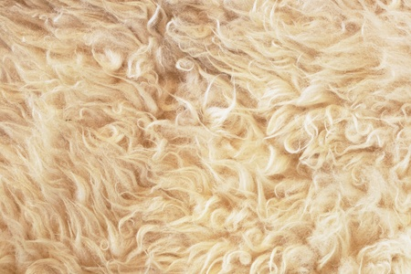 gray wooly sheep fleece for background texture Stock fotó