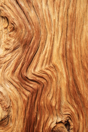 woodgrain: eroded pine trunk with curved wood grain background texture Stock Photo