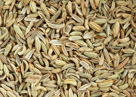 fennel seed: macro background image of fennel seed spice