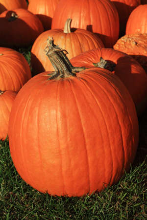 large pumpkin: vertical image of pumpkins on grass with one large pumpkin in the front