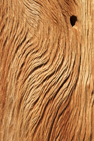bristlecone: weathered and eroded bristlecone pine wood background texture Stock Photo