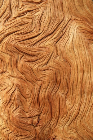 tan contorted and eroded woodgrain background texture photo
