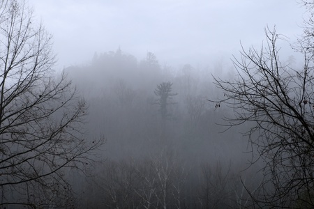 foggy hill: cold foggy hill with silhouettes of bare tree branches