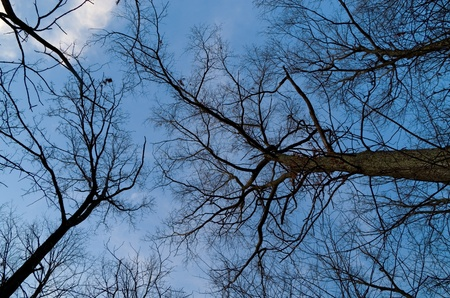 looking up into bare tree branches in twilight