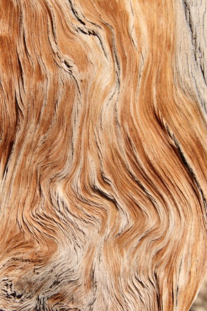 twisted and contorted distressed wood grain background texture Stock Photo - 13369093