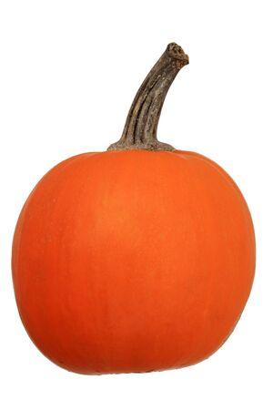 orange mini pumpkin isolated on white background Stock Photo - 13497913