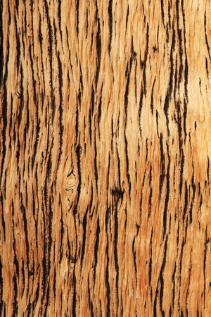 weathered mountain pine wood background texture Stock Photo - 13599777