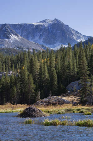 beaver lodge in a small lake in the mountains Stock Photo - 16001924