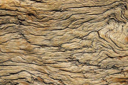 weathered and contorted natural old pine wood Stock Photo