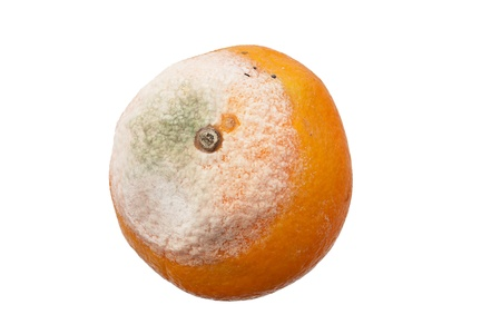moldy orange fruit isolated on white background photo