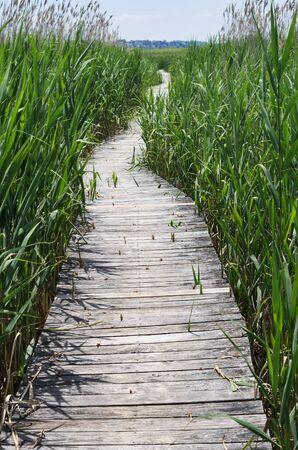 boardwalk trail through a marsh at Plum Island Stock Photo - 21393391