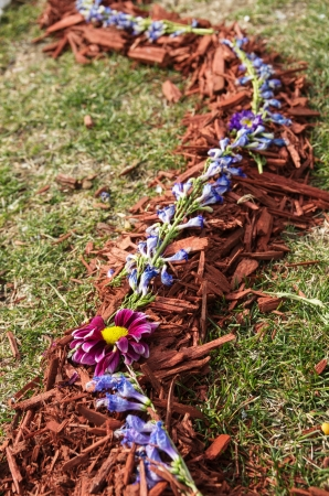bark mulch: natural decoration with flowers on bark mulch over grass Stock Photo