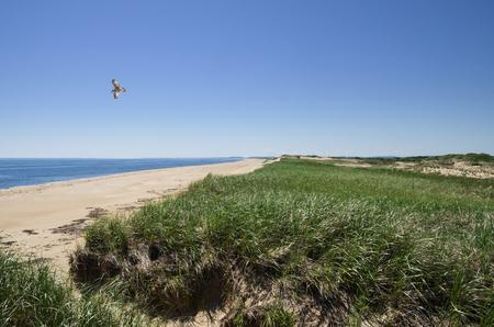 plum island: dunes and beach on Plum Island in Massachusetts