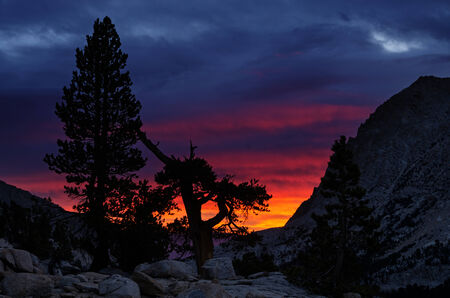 stormy mountain sunrise with silhouetted pine trees Stock Photo - 24317006