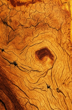 weathered and contorted wood grain from a mountain pine tree Stock Photo - 24317032