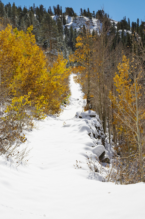 snowy path past some aspen trees with yellow leaves and up a hill Stock Photo - 24317106
