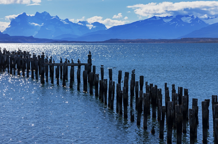 king cormorant: Patagonia bay and mountains from Puerto Natales with cormorants on old pilings and Mount Balmaceda across Last Hope Sound