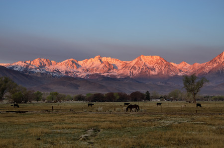 basin mountain: rural mountain sunrise with snow clad Sierra Nevada mountains lit up by first light and horse and cows in a field in Bishop California