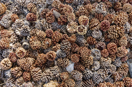 natural pine cones and pine needles on the ground background texture Stock fotó