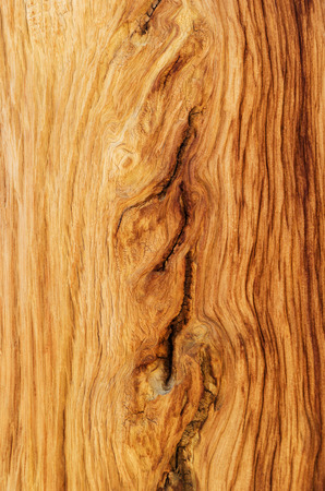 weathered wood grain from an alpine pine tree photo