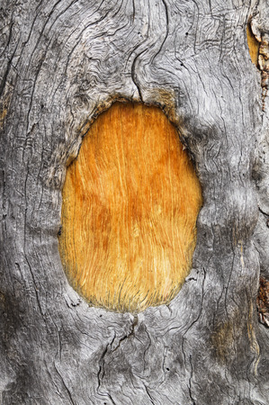 dead gray tree trunk with wood grain and frame around orange brown wood window from an old blaze