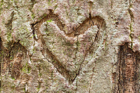 heart shape carved into tree bark with some moss and lichen Stock Photo
