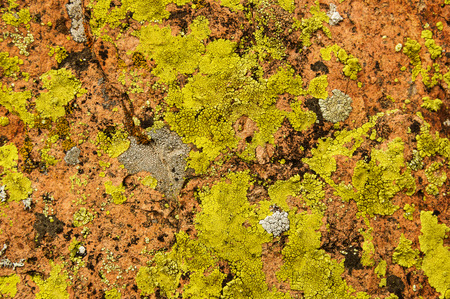 colorful lichen covered rock background