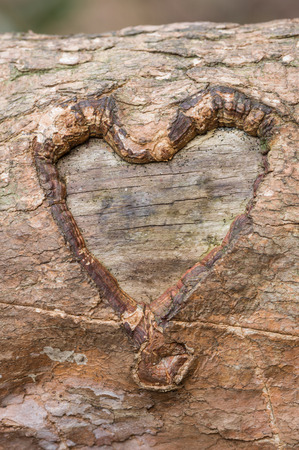 heart carved into the bark on a tree branch