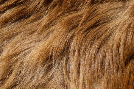 brown colored black bear fur background texture image