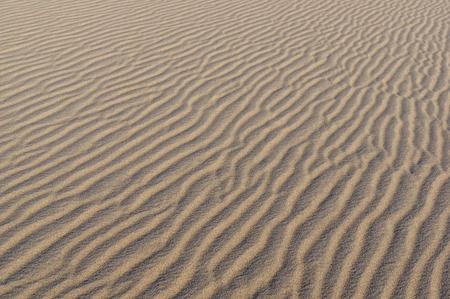 rippled sand surface on a Eureka Valley sand dune in Death Valley National Park California
