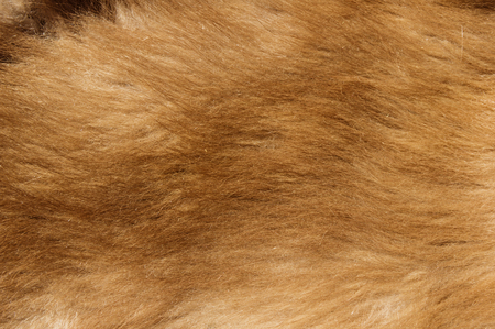 brown colored black bear cub fur background texture image Stock Photo