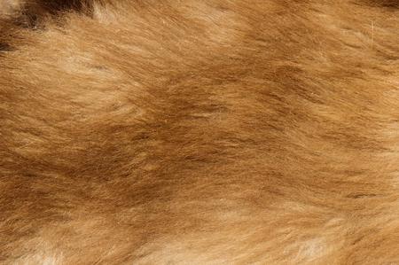 ourson: brun image color�e noir ourson texture fourrure de fond