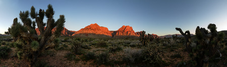 cholla: wide panorama of red rocks mountains lit by morning sunlight with joshua trees