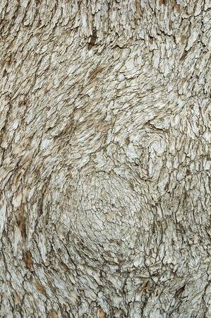 lebanon: cedar of lebanon tree bark background texture Stock Photo