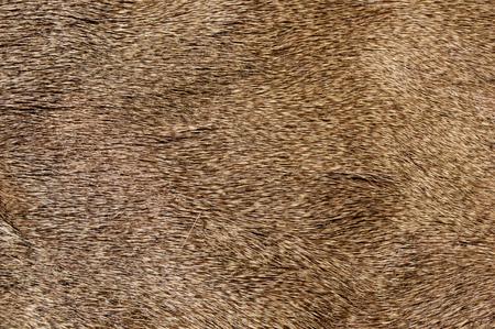 textura pelo: imagen de fondo de la textura de la piel de ciervo mula Foto de archivo