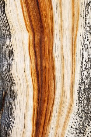 weathered pinyon pine wood grain background texture