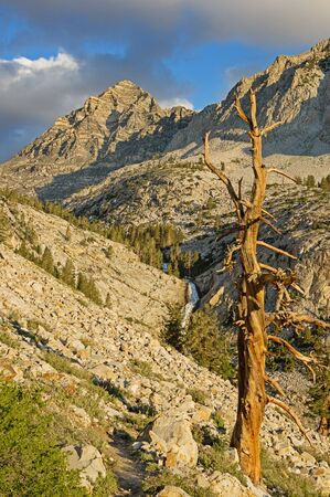 Pine Creek mountain valley with dead tree and waterfall in the morning