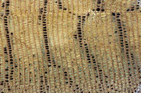 snake skin: old tanned snake skin background texture