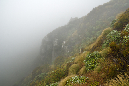 mysterious foggy slope with cliff along Hump Ridge in New Zealand