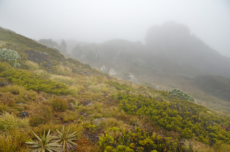 Hump Ridge in New Zealand South Island on a foggy afternoon