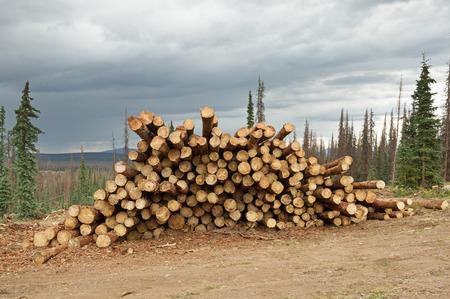boomstammen gestapeld uit een schorskever gedood berging hout operatie Stockfoto