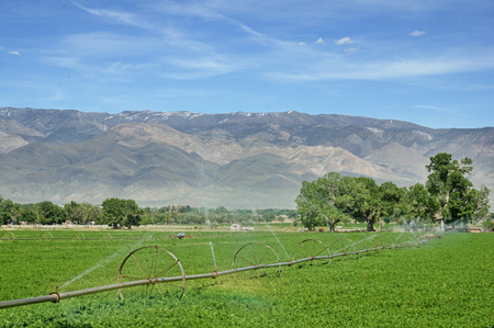 wheel line irrigation system watering an alfalfa field in the Owens Valley